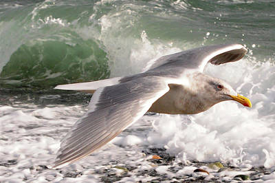 Photograph - Seagull And Waves by Jack Moskovita