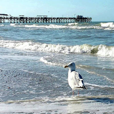 Photograph - Seagull And Waves - Redington Beach Florida by Scott D Van Osdol