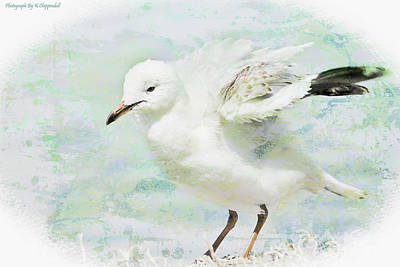 Digital Art - Seagull Art 5851 by Kevin Chippindall