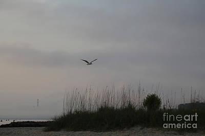 Photograph - Seagull At Dawn Over Yorktown Beach by Lara Morrison
