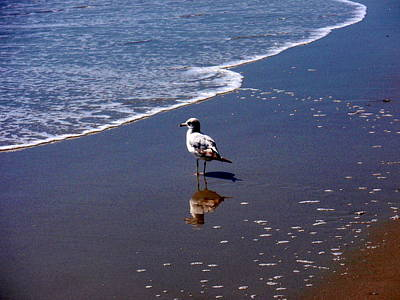 Print featuring the photograph Seagull At Myrtle Beach  by Beth Akerman