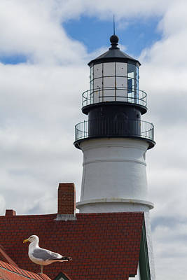 Photograph - Seagull At Portland Head Light by Kirkodd Photography Of New England
