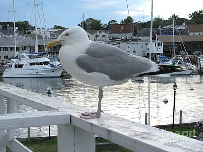 Seagull At Rest Art Print
