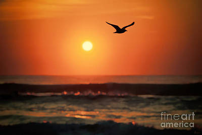 Photograph - Seagull At Sunrise by Jeff Breiman