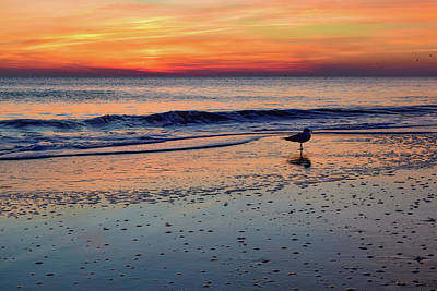Photograph - Seagull At Sunrise by Nicole Lewis