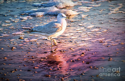 Digital Art - Seagull At Sunset by Georgianne Giese