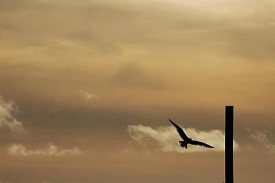 Photograph - Seagull At Sunset by Jennifer Karon