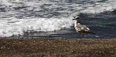 Photograph - Seagull At The Beach by Donna Miller