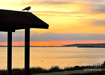 Photograph - Seagull At Watch by Janice Drew