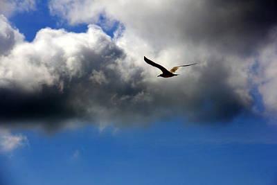 Photograph - Seagull by Athala Carole Bruckner