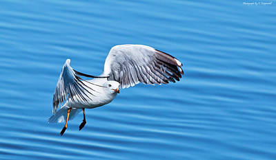 Digital Art - Seagull Beauty 9863 by Kevin Chippindall