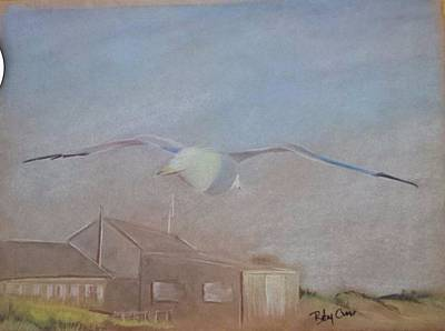 Pastel - Seagull by Betsy Carlson Cross