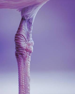 Photograph - Seagull by Bob Orsillo