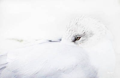 Photograph - Seagull by Cathy Harper