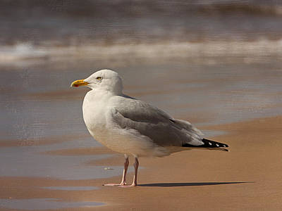 Photograph - Seagull by Charles McKelroy
