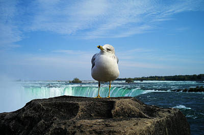 Photograph - Seagull Checking Out The Photographers by Lawrence Christopher