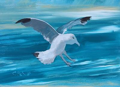 Painting - Seagull by Christina Schott