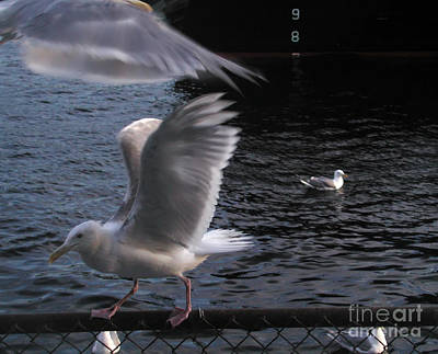 Photograph - Seagull Circus by Kathi Shotwell