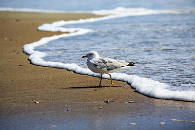 Art Print featuring the photograph Seagull by David Chandler