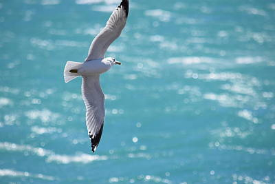 Illinois Photograph - Seagull by Deborah Irving