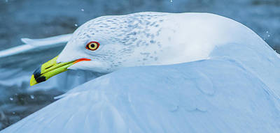 Photograph - Seagull Departing Close-up by Jeff at JSJ Photography