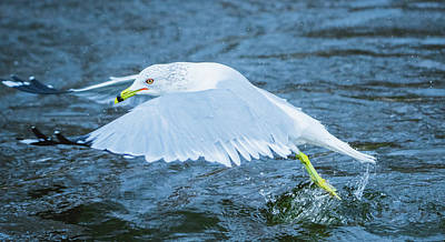 Photograph - Seagull Departure by Jeff at JSJ Photography