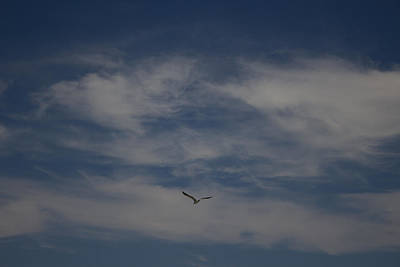 Photograph - Seagull Enjoying The Heaven Skies by Amazing Photographs AKA Christian Wilson