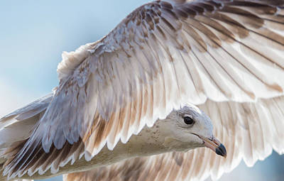 Photograph - Seagull Eye And Feathers Forward by Jeff at JSJ Photography