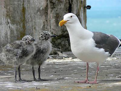 Seagull Family Art Print