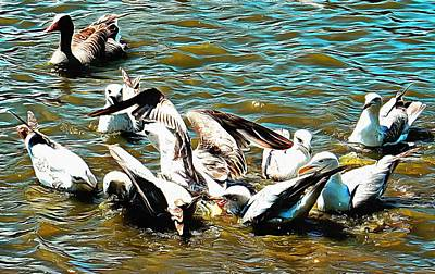 Photograph - Seagull Feeding Frenzy by Dorothy Berry-Lound