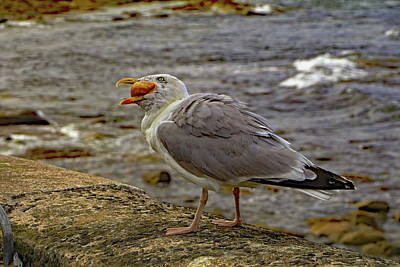 Photograph - Seagull Feeding by Tony Murtagh