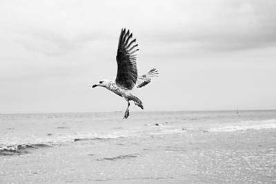 Photograph - Seagull by Fine Arts