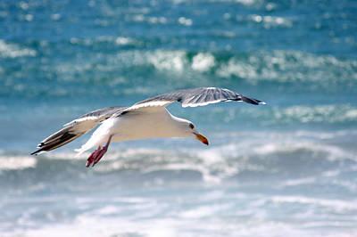 Seagull Flight Art Print by Stormshade Designs