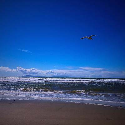 Photograph - Seagull Flight by Miki Klocke