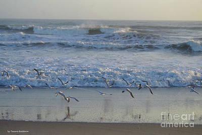 Photograph - Seagull Flight by Tannis Baldwin