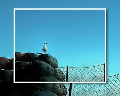 Photograph - Seagull Floats Net by Jerry Sodorff