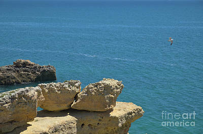 Seagull Flying Over The Cliffs Art Print