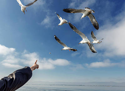 Photograph - Seagull Flying by Pradeep Raja PRINTS