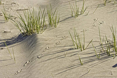 Photograph - Seagull Footprints And Beach Grass Popham Beach Maine by Keith Webber Jr