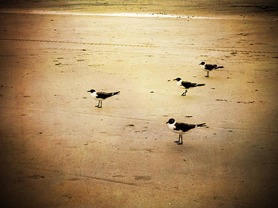 Photograph - Seagull Formation by Michael Colgate