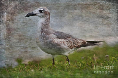 Seagull Friend Art Print by Deborah Benoit