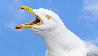 Seagulls Photograph - Seagull Calling by Geoff Smith