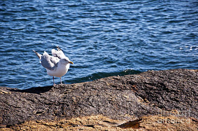 Photograph - Seagull  by Glenn Gordon