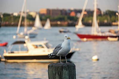 Seagull Guarding The Boston Harbor Boston Ma Art Print