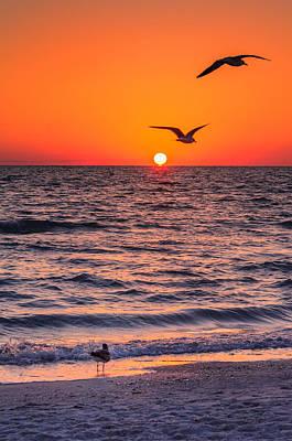 Photograph - Seagull Hat-trick by Craig Szymanski