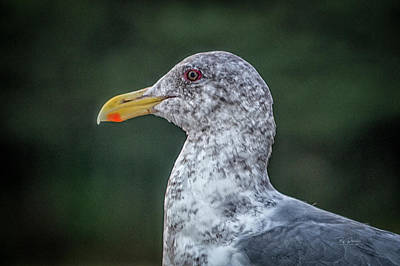 Photograph - Seagull Head Shot by Bill Posner