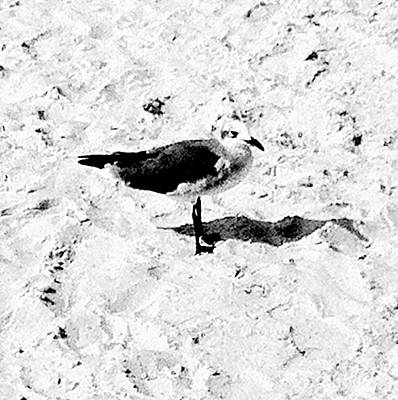 Photograph - Seagull I by Robin Lewis