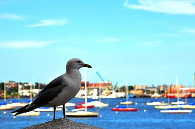 Photograph - Seagull In Boston Harbor by Andrew Dinh