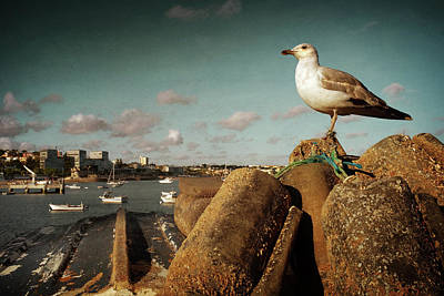 Photograph - Seagull In Cascais by Carlos Caetano