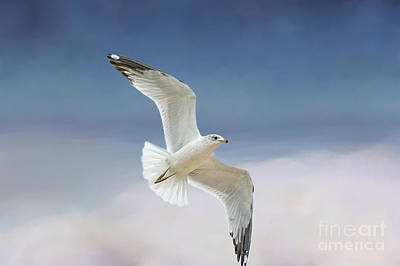 Flying Seagull Photograph - Seagull In Flight by Bonnie Barry